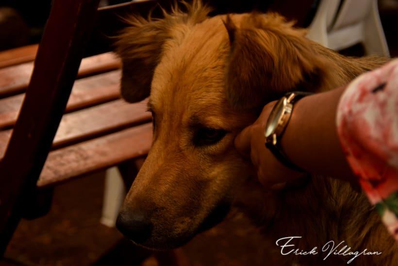 doggie life 0
