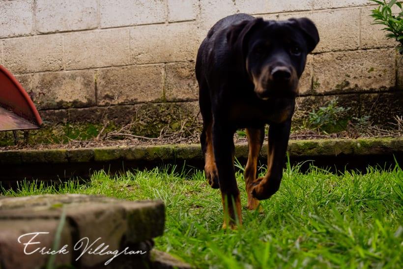 doggie life 1