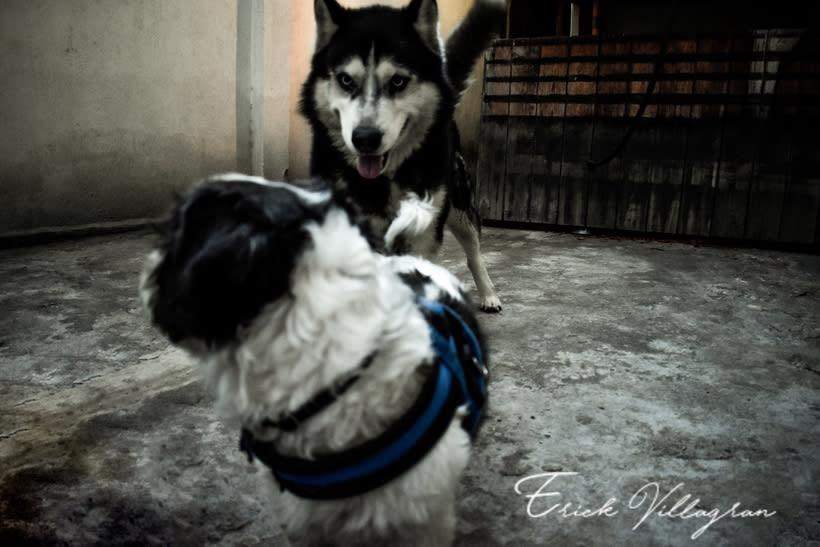 doggie life 2