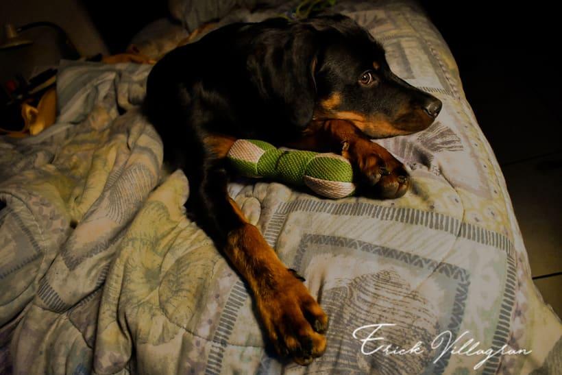 doggie life 5