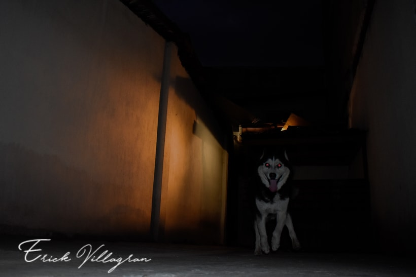 doggie life 8