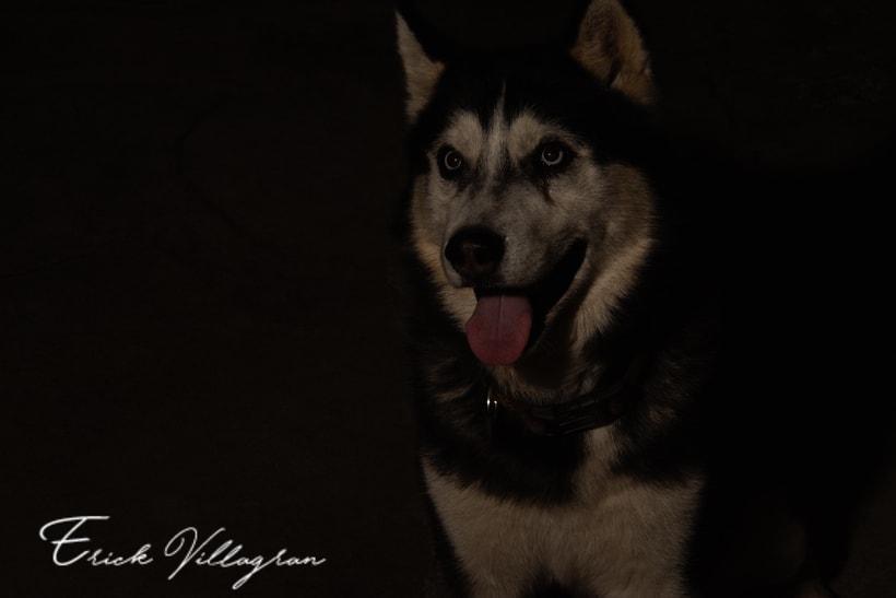 doggie life 9