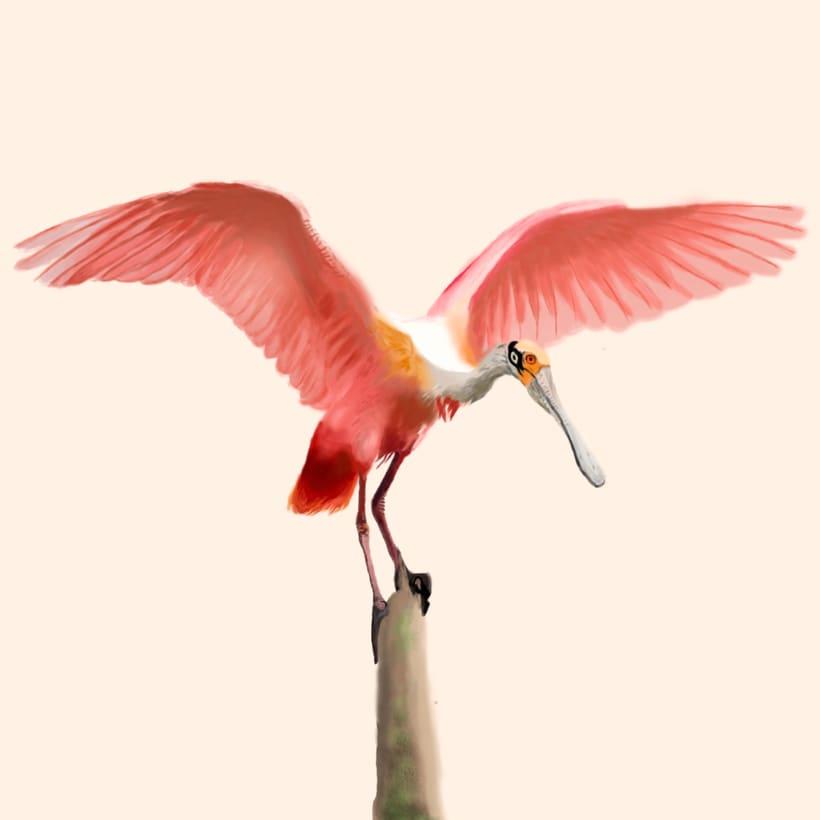 Aves - Biodiversidad 3
