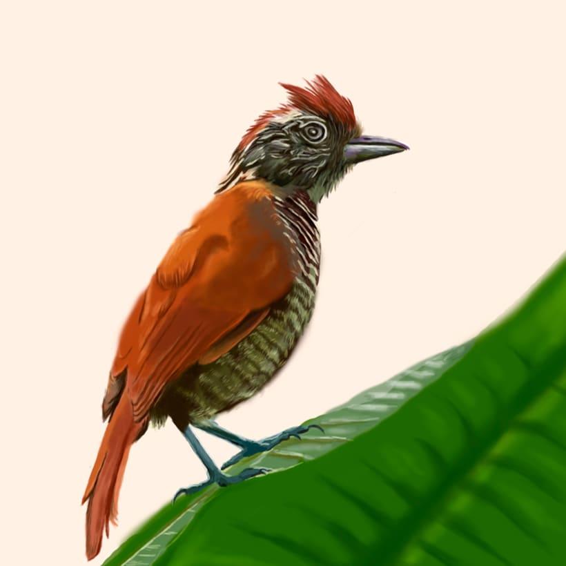 Aves - Biodiversidad 10