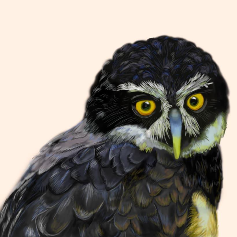 Aves - Biodiversidad 1