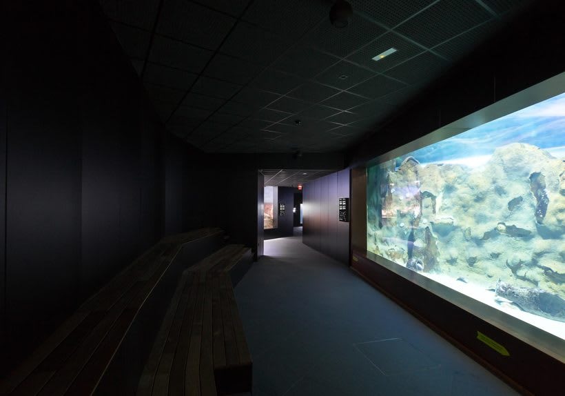 Aquarium Donostia-San Sebastián 4
