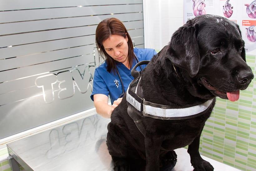Fotografía corporativa de la clínica veterinaria Salvatierra (2016) 7