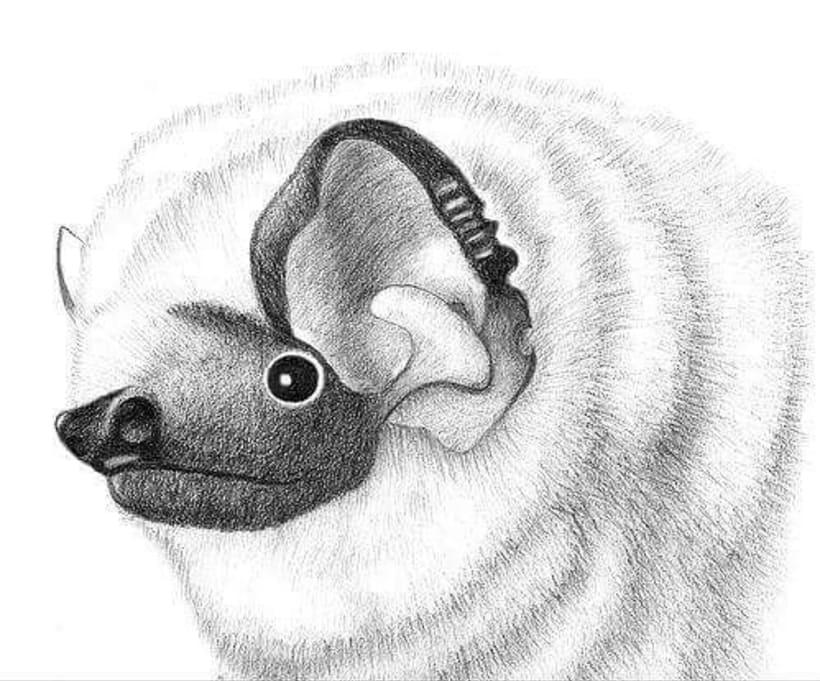 Murciélagos de Chile -1