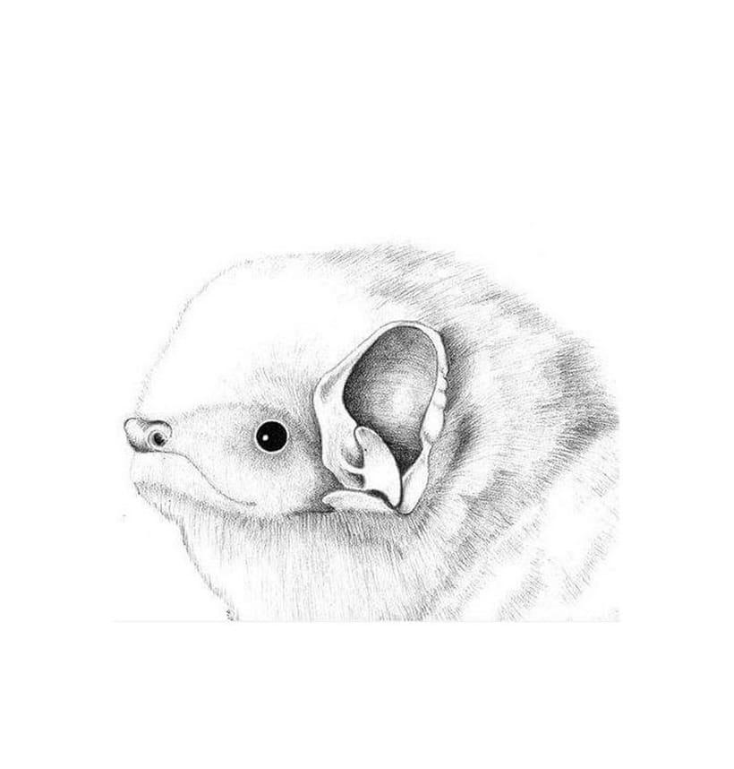 Murciélagos de Chile 0