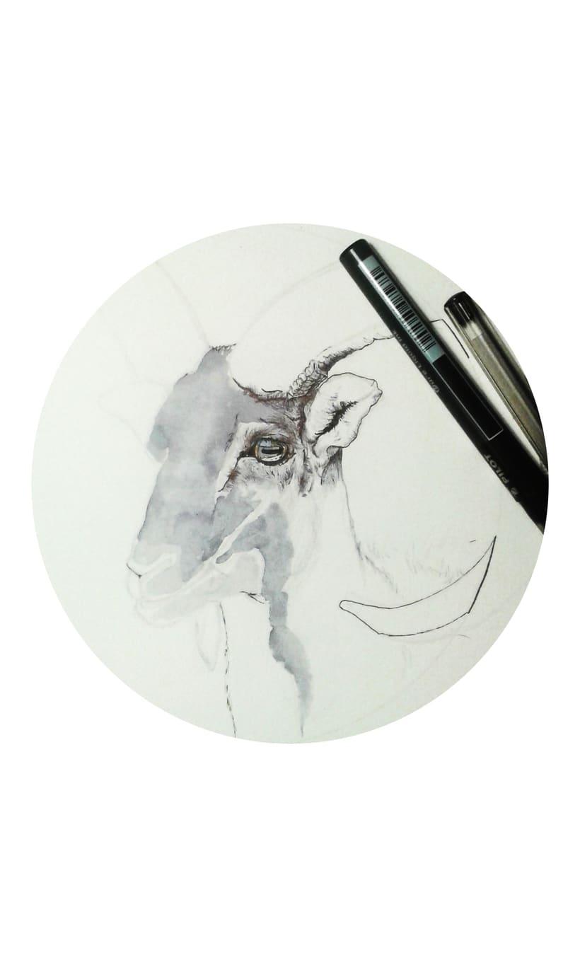 Serie animales -1