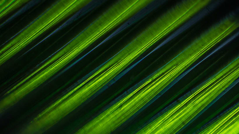 Curly Light | Macro·photography Vol. I 1