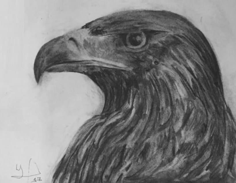 'Aquila chrysaetos' 0