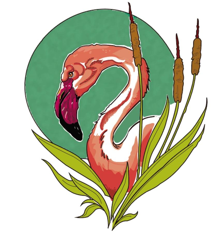 Flamenco -1