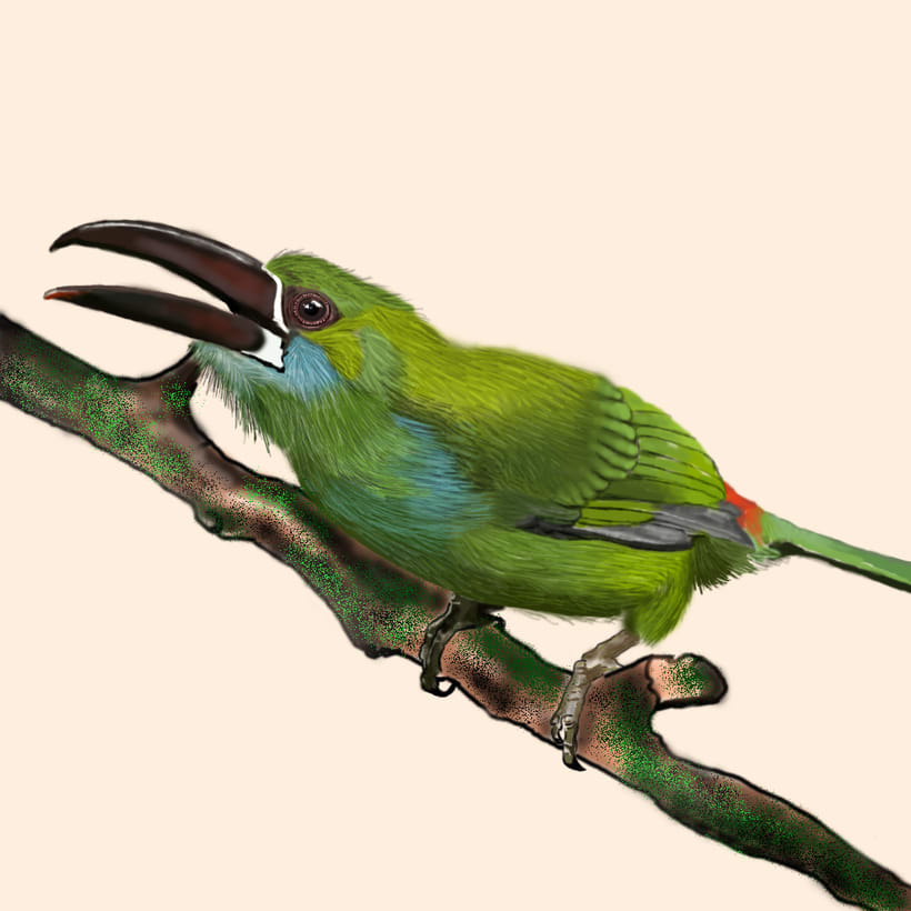 Aves - Biodiversidad 9