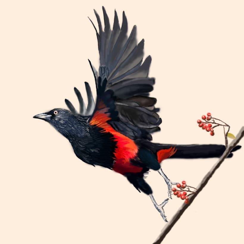 Aves - Biodiversidad 21