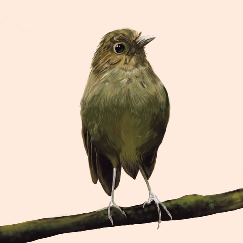 Aves - Biodiversidad 8