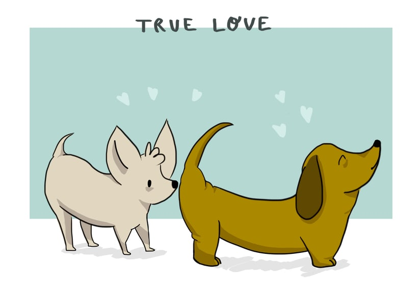 Dog lovers -1
