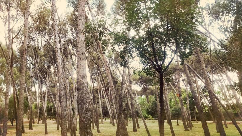 Fotografía - Parque Quinta de los molinos 1