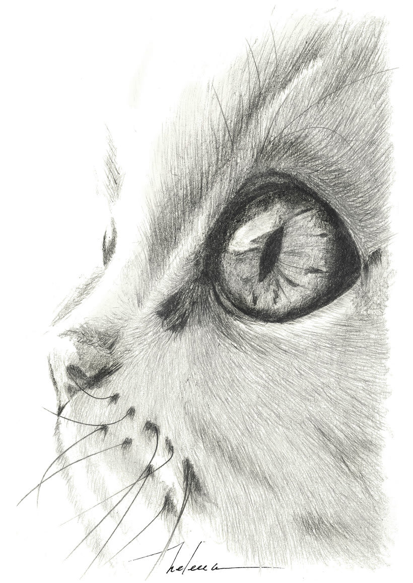 ...my little cat... -1