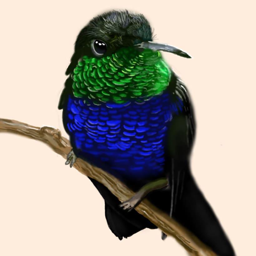 Aves - Biodiversidad 6