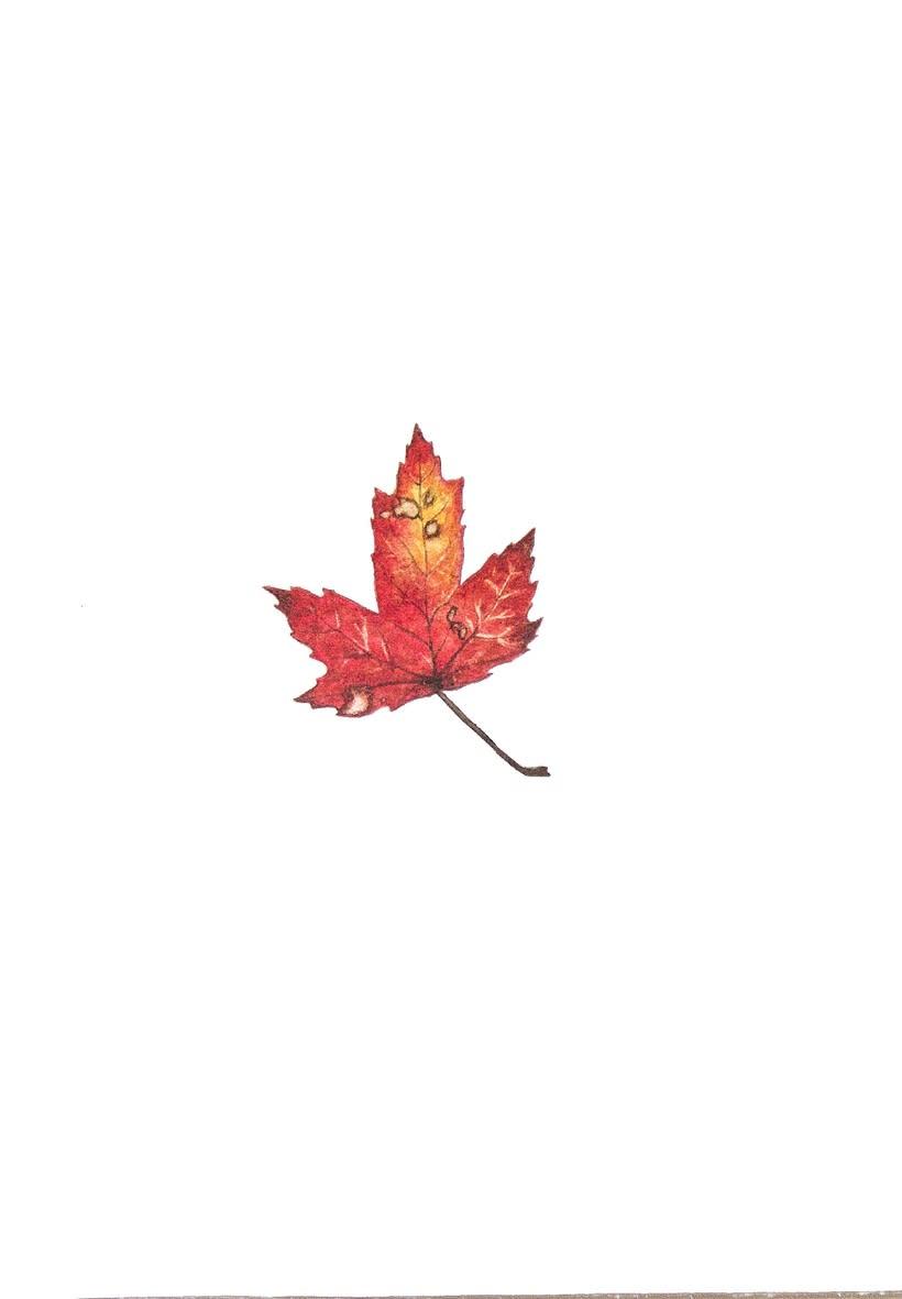 Colores de otoño 6