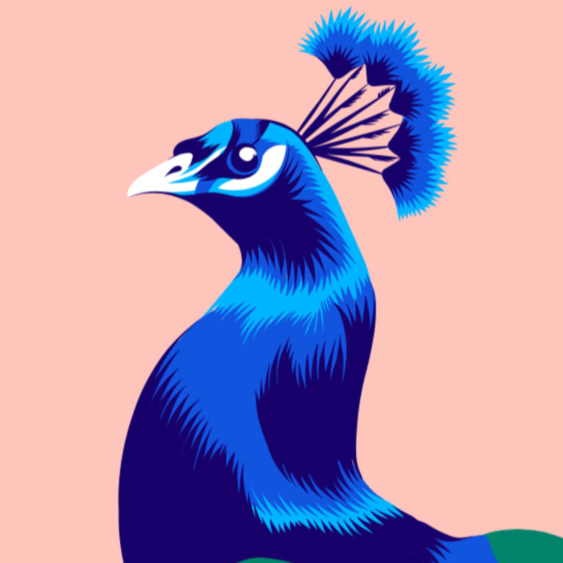 peacock vector illustration domestika