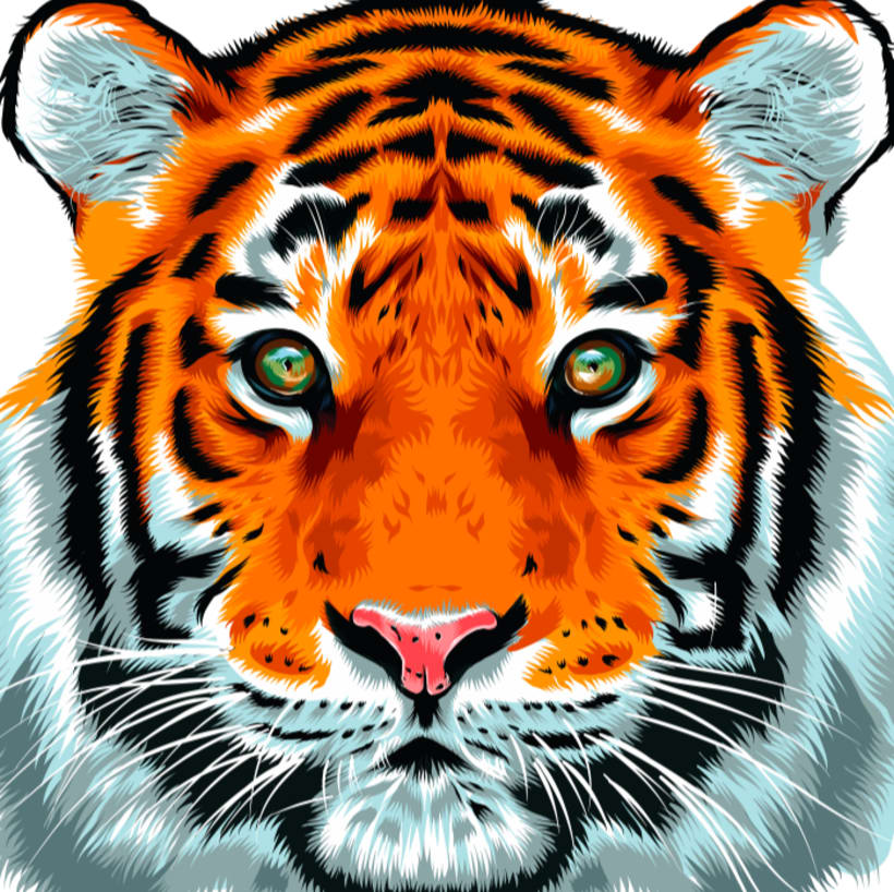 Tiger Vector Illustration -1