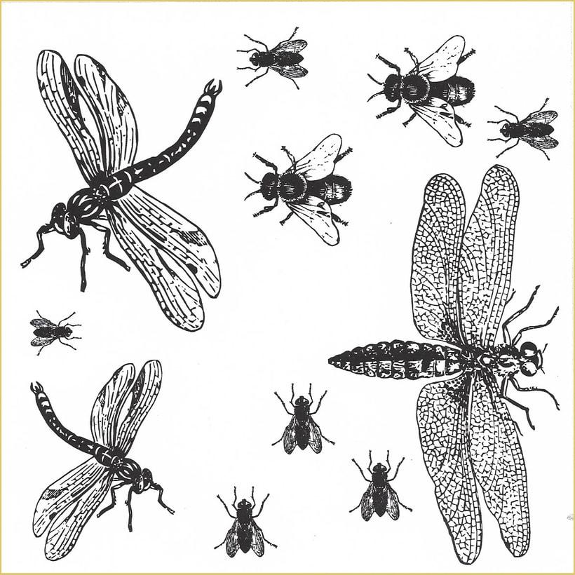Insectos: Diseño de estampados textiles 0