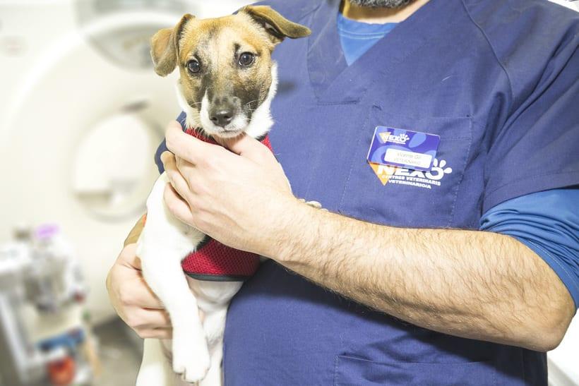 Fotografía veterinaria -1