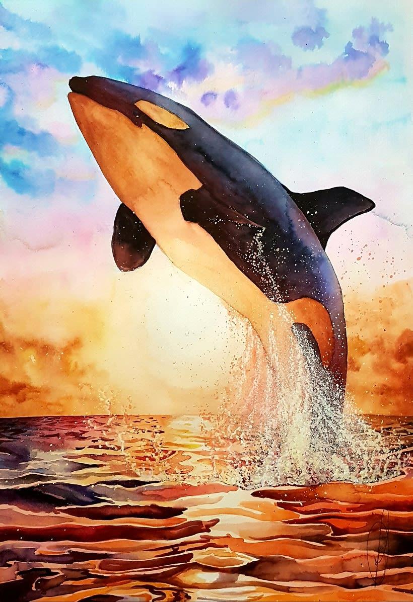 Orca -1