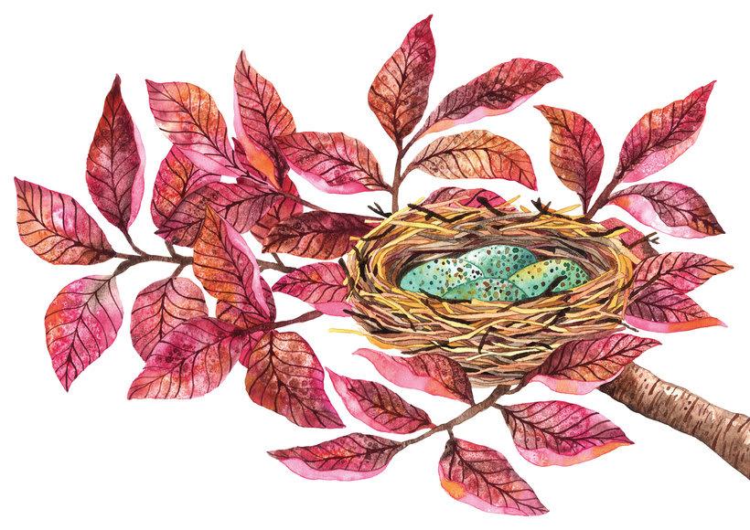 Ilustraciones botánicas en acuarela 0