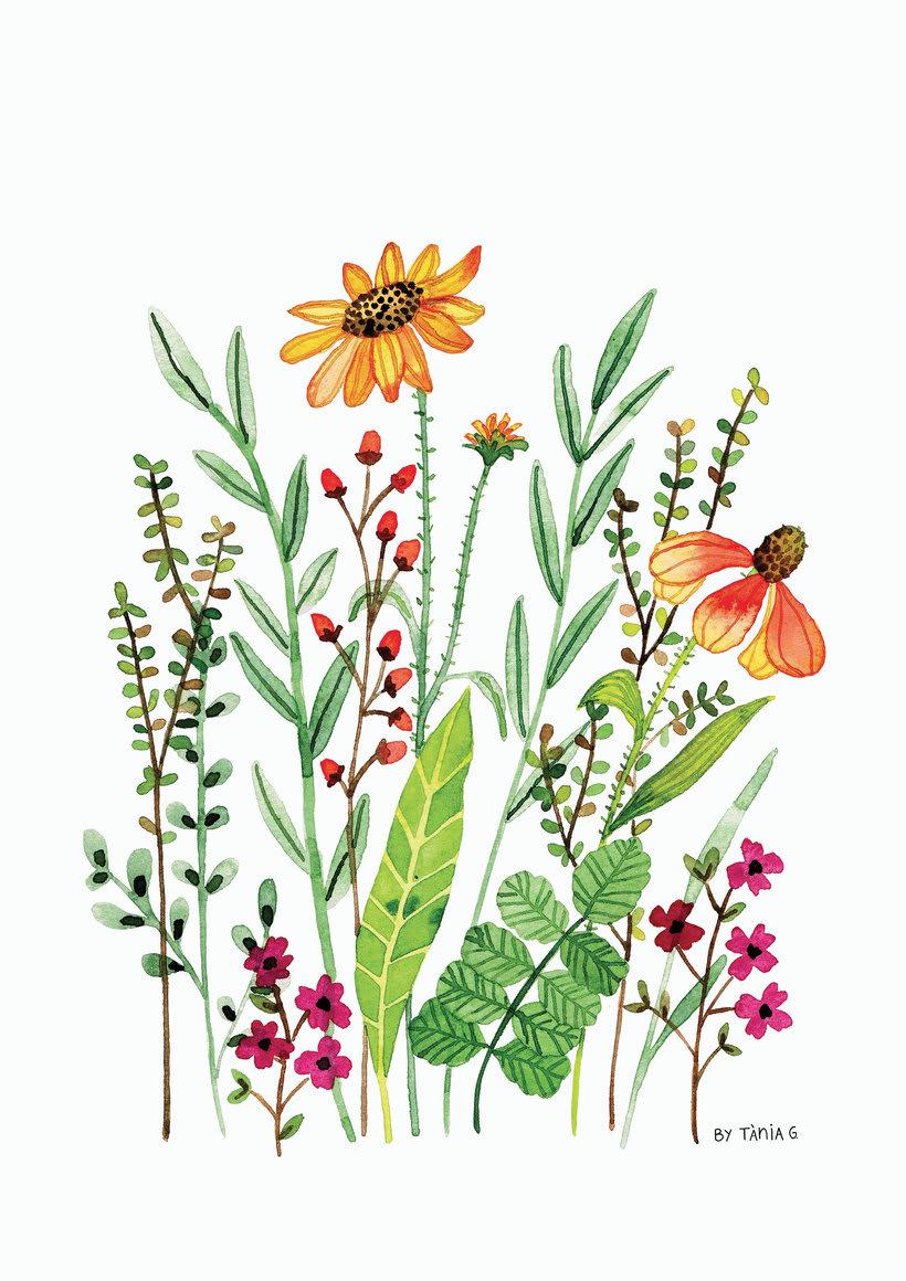 Ilustraciones botánicas en acuarela 1