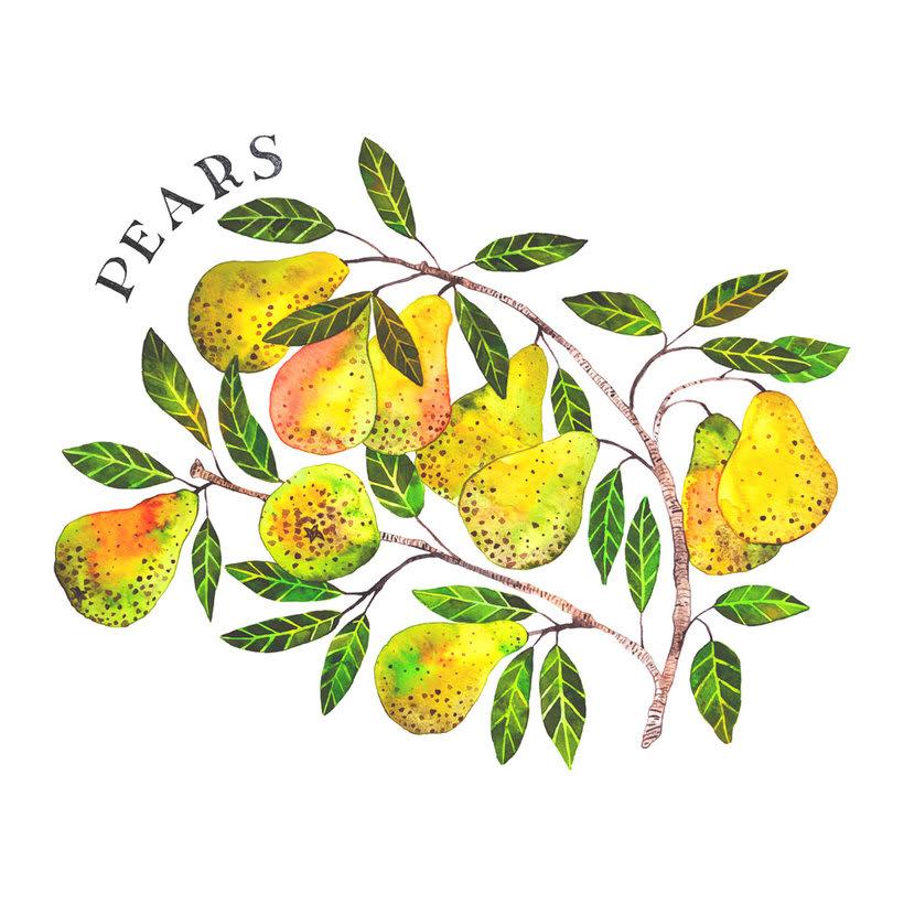 Ilustraciones botánicas en acuarela 5