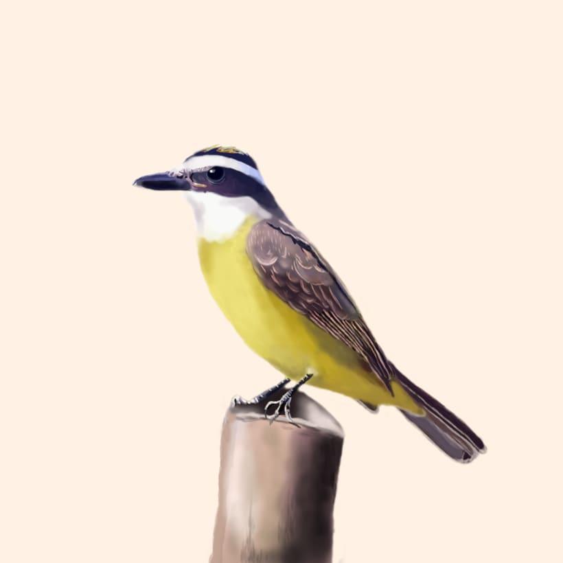 Aves - Biodiversidad 18