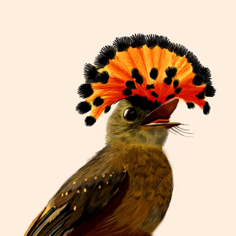 Aves - Biodiversidad 4