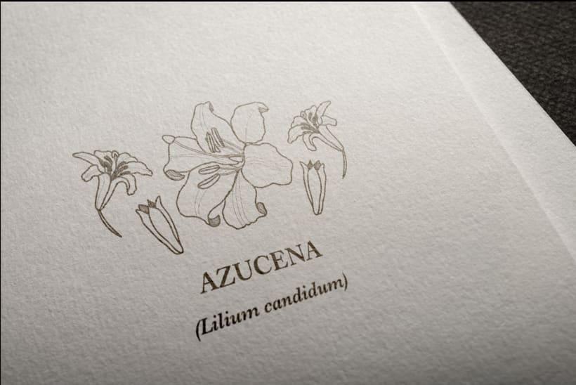 Mi Proyecto del curso: Diseño e ilustración de un Fanzine 2