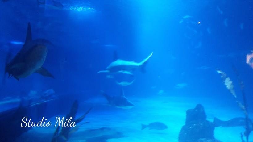 La magia del mar #mar #Mirada #azul 3