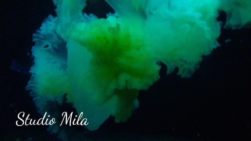 La magia del mar #mar #Mirada #azul 8