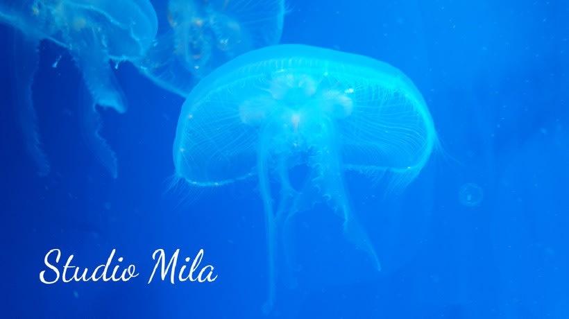 La magia del mar #mar #Mirada #azul 9