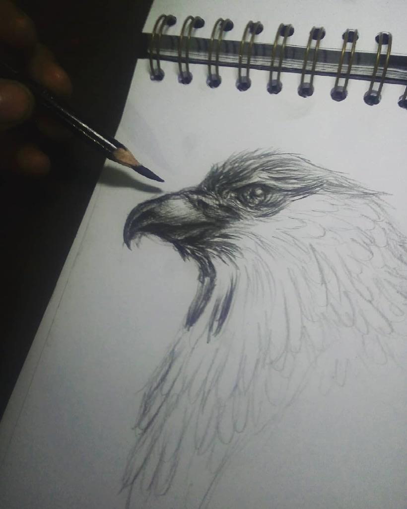Boceto de un Águila   0