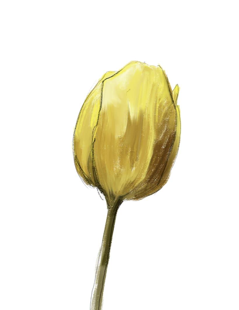 Golden tulip 0