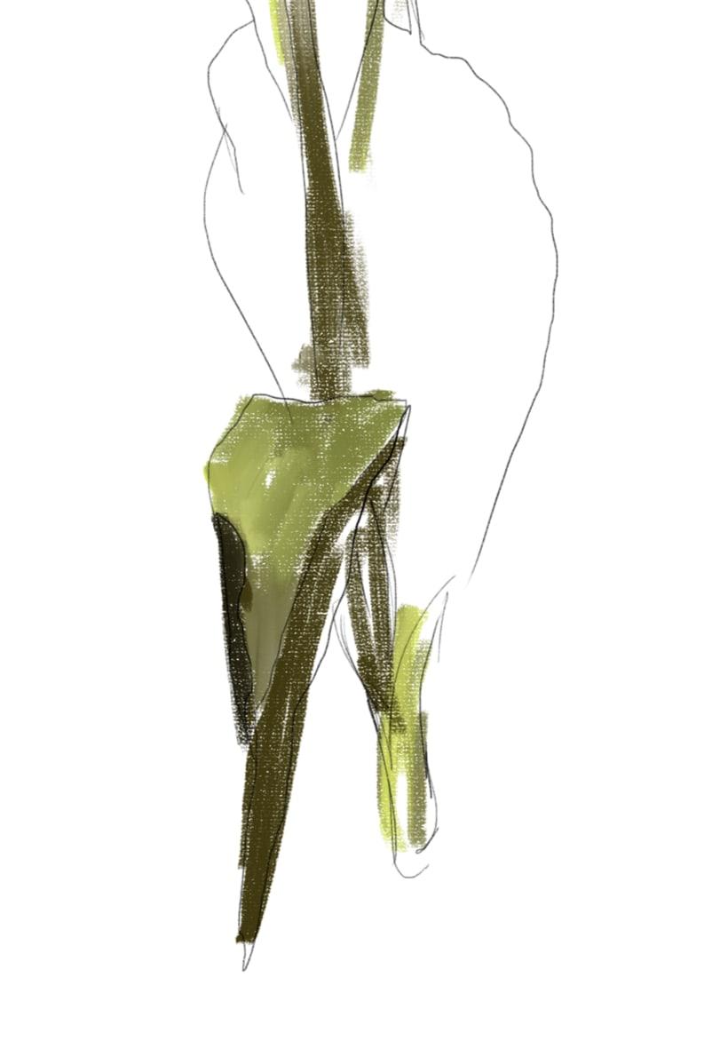 Golden tulip 1