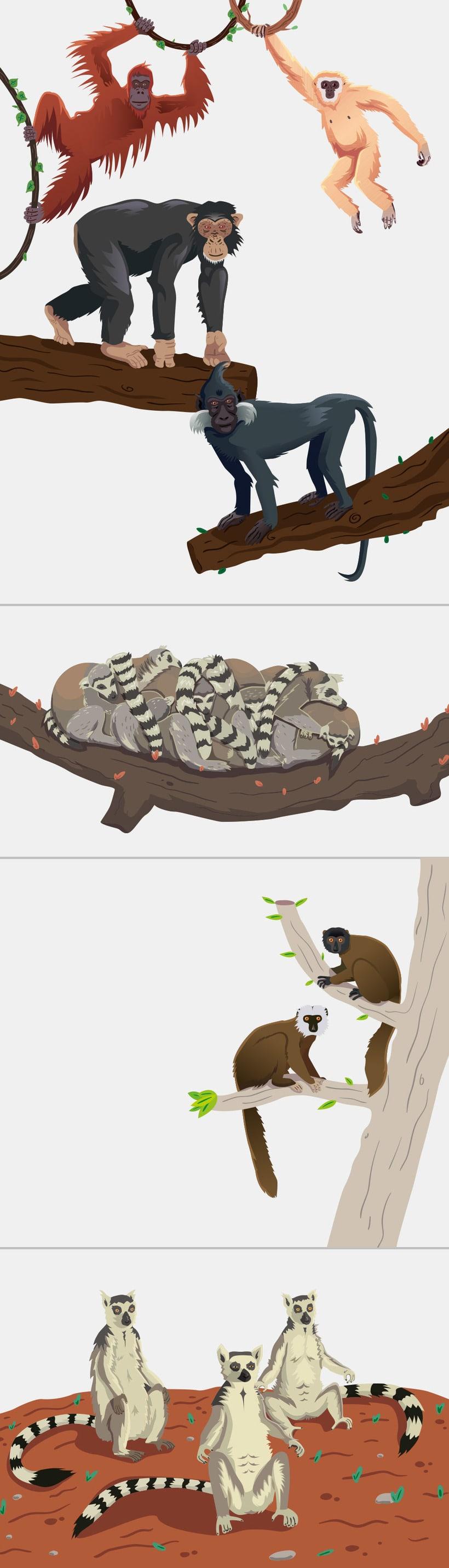 Ilustraciones para Rio Safari Elche 0
