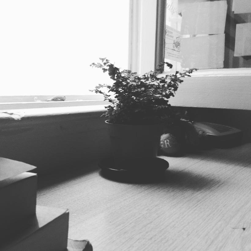 En gris y sepia 21