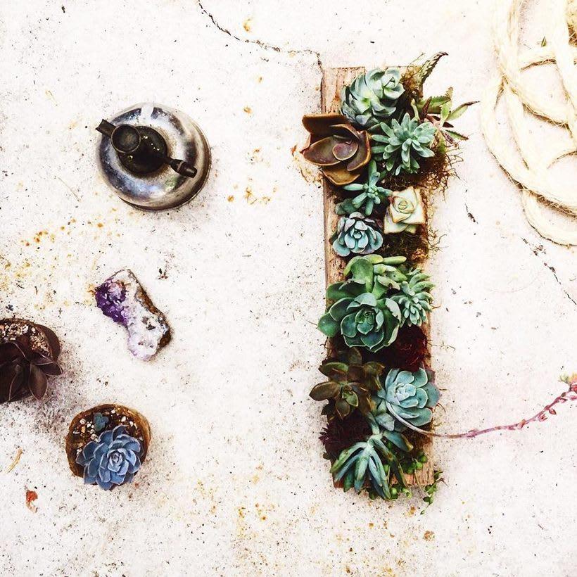 [Terrarios de Cactus & Suculentas] 2