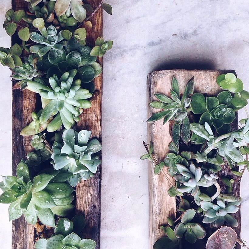 [Terrarios de Cactus & Suculentas] 4