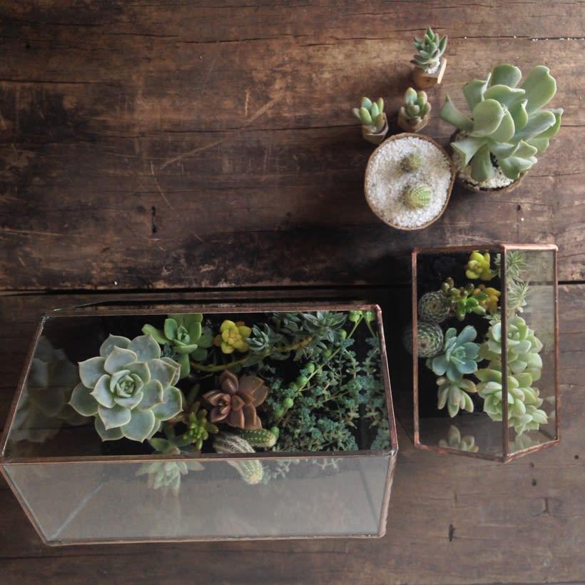 [Terrarios de Cactus & Suculentas] 5