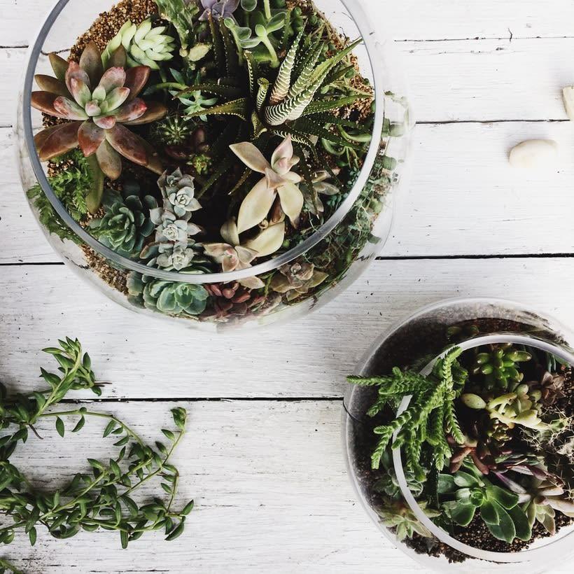 [Terrarios de Cactus & Suculentas] 6