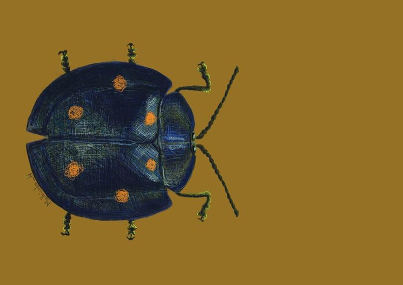 Beetle sale de paseo 0