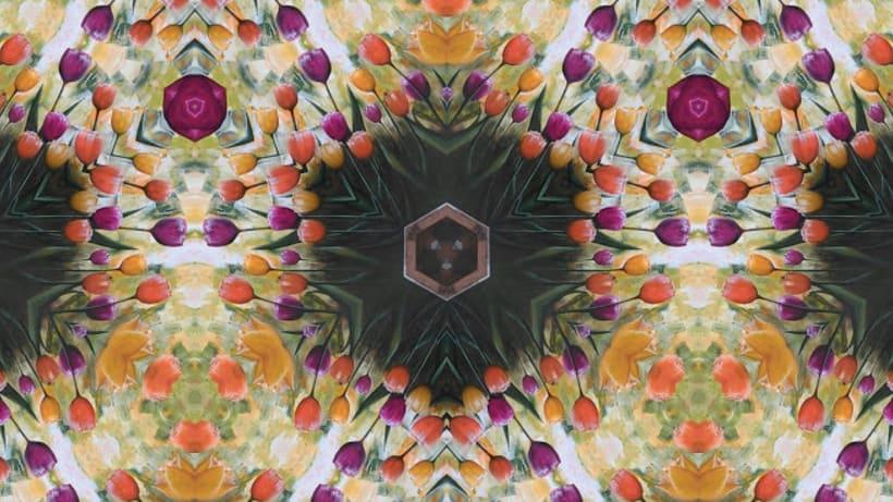 Jardín de Tulipanes 1